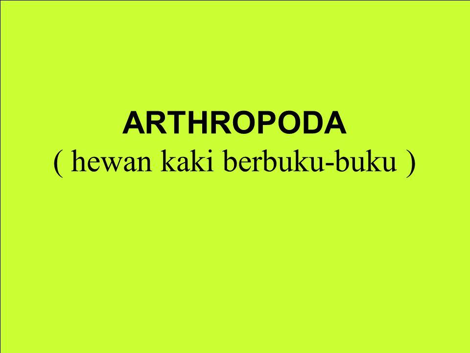 ARTHROPODA ( hewan kaki berbuku-buku )