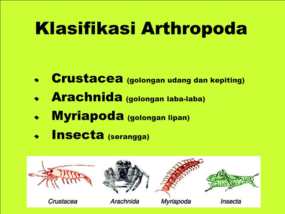 Klasifikasi Arthropoda
