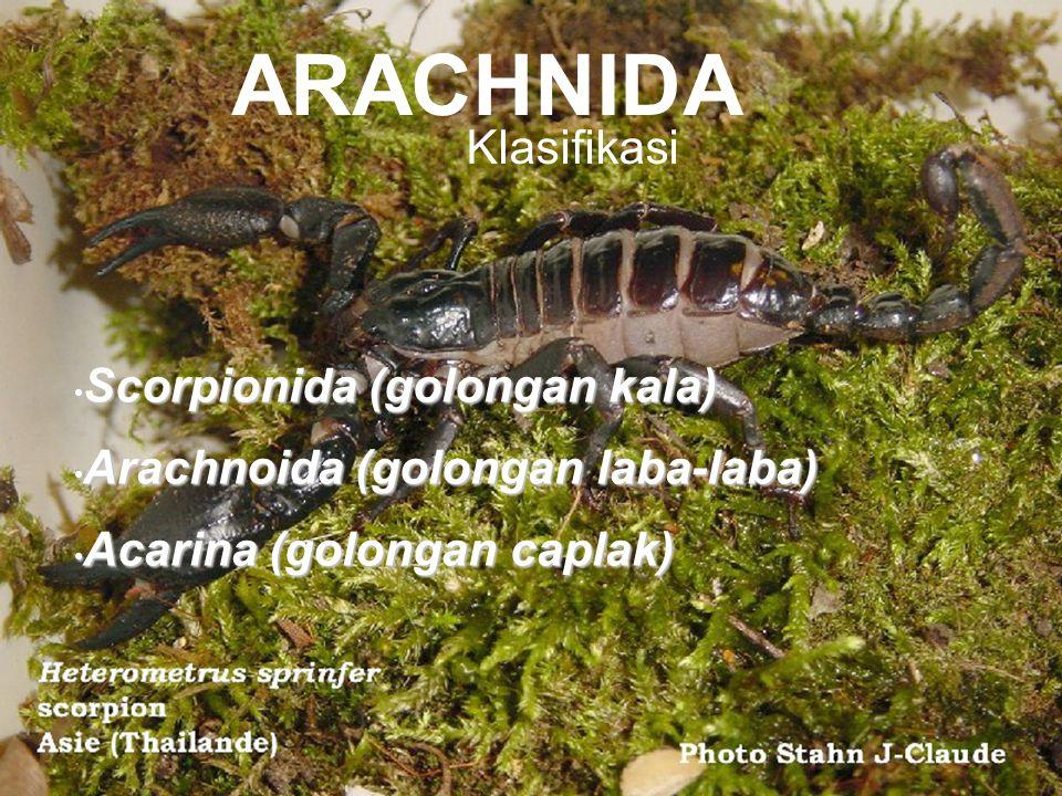 ARACHNIDA Klasifikasi Scorpionida (golongan kala)