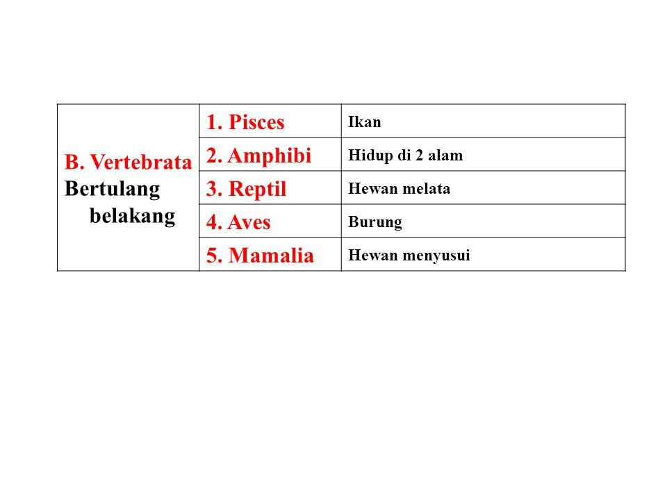 B. Vertebrata Bertulang belakang 1. Pisces 2. Amphibi 3. Reptil