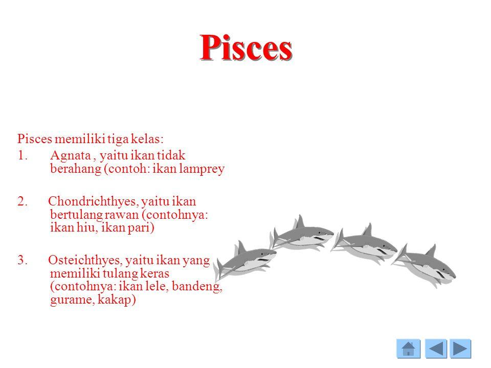 Pisces Pisces memiliki tiga kelas: