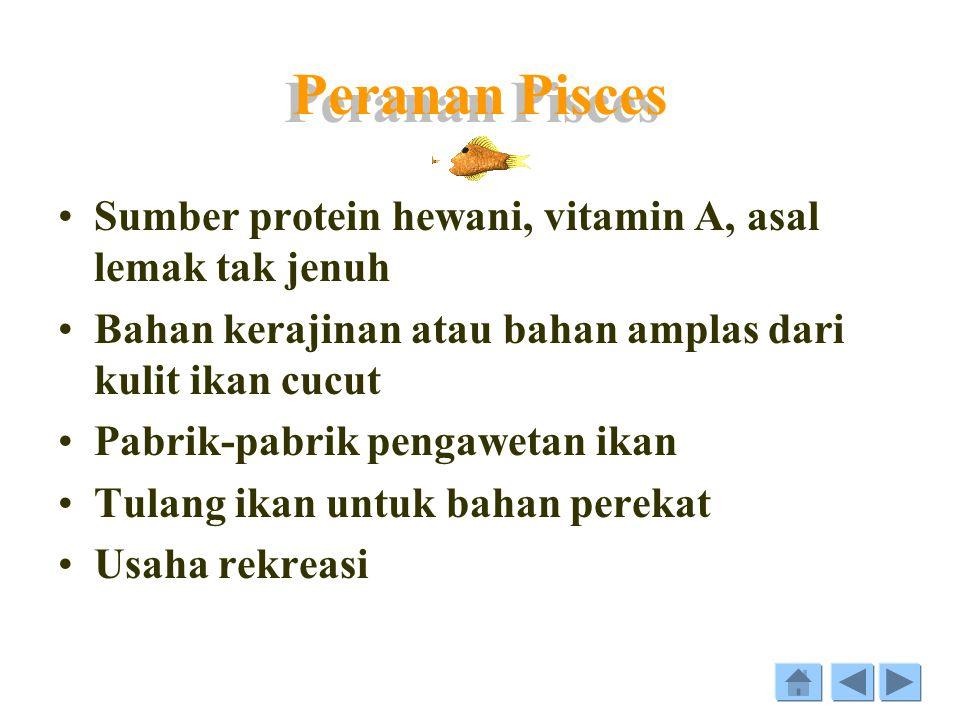 Peranan Pisces Sumber protein hewani, vitamin A, asal lemak tak jenuh