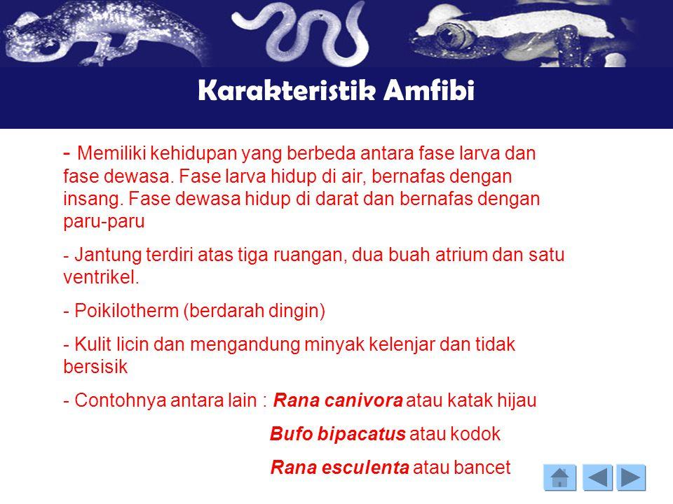 Karakteristik Amfibi