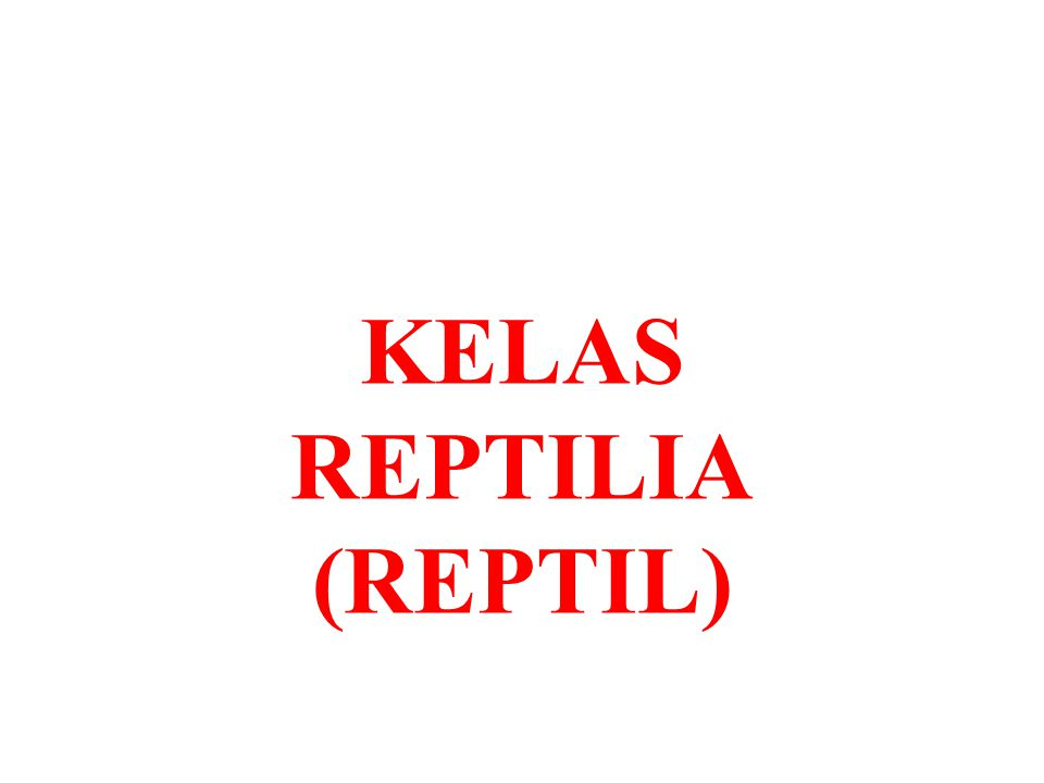 KELAS REPTILIA (REPTIL)