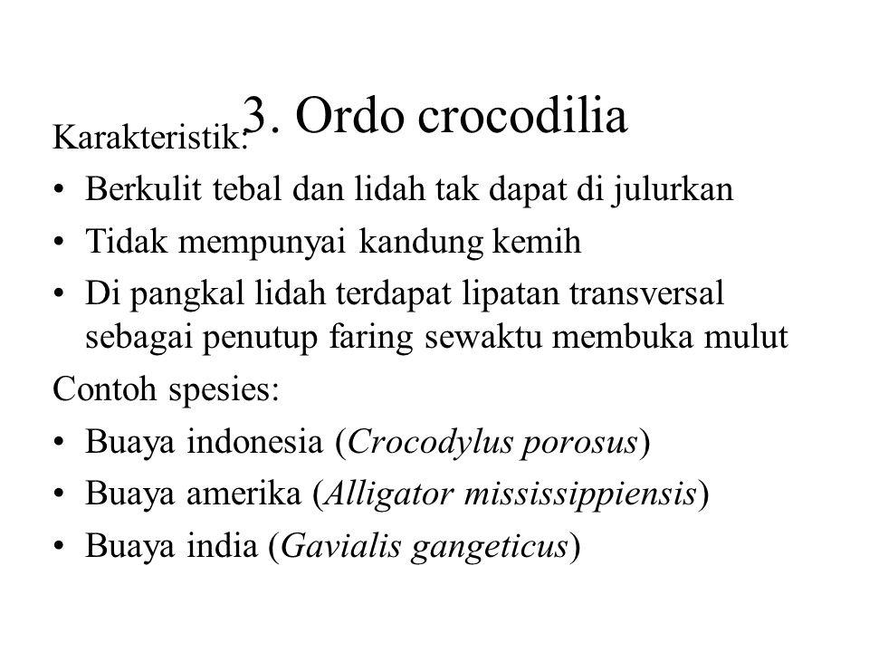 3. Ordo crocodilia Karakteristik:
