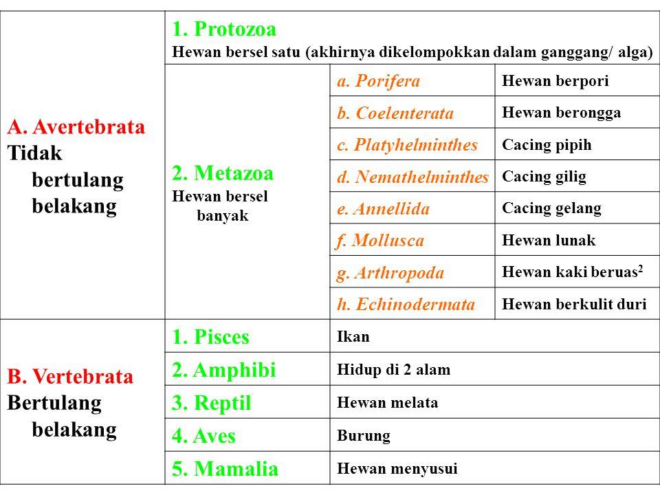 Tidak bertulang belakang 1. Protozoa 2. Metazoa