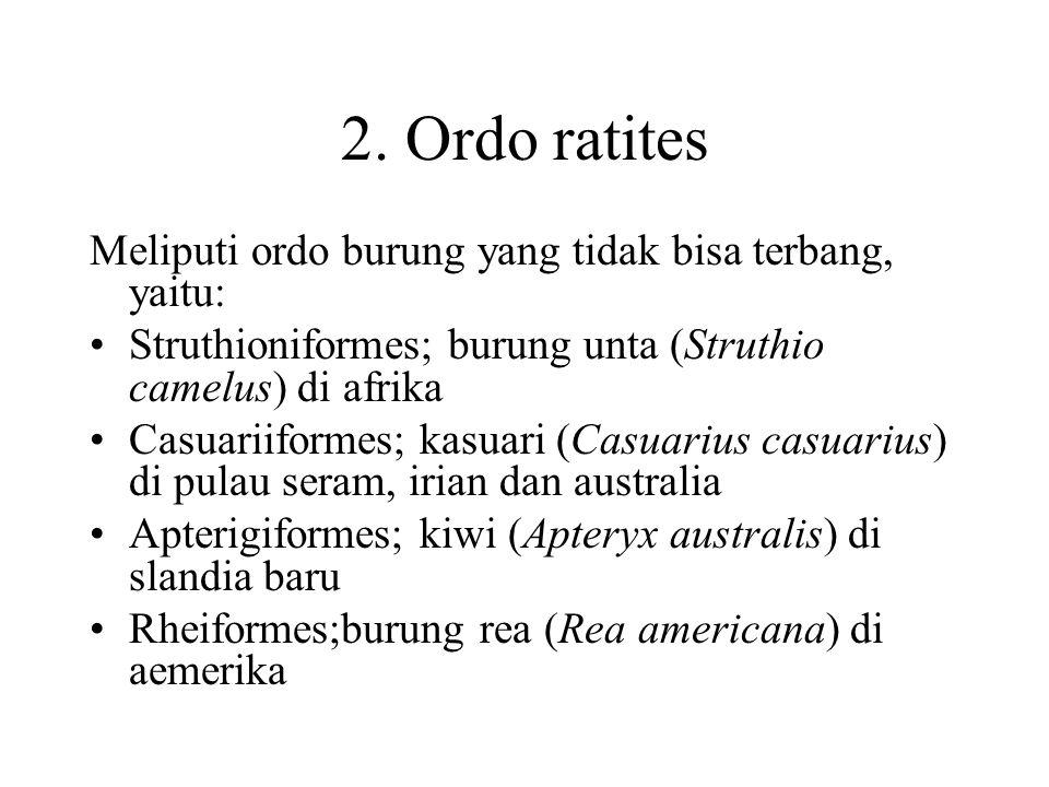 2. Ordo ratites Meliputi ordo burung yang tidak bisa terbang, yaitu: