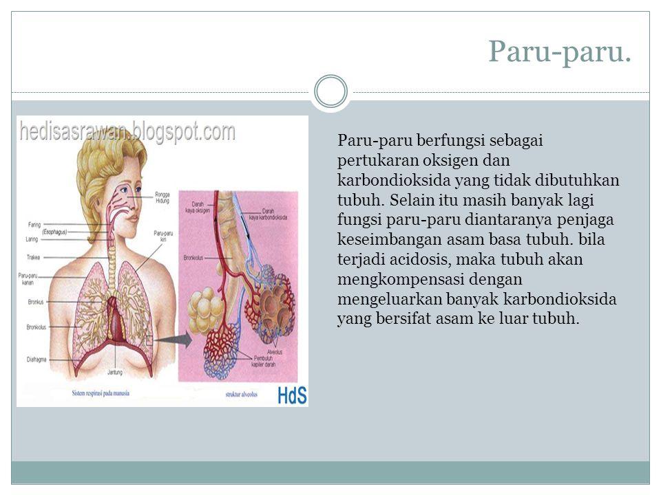 Paru-paru.