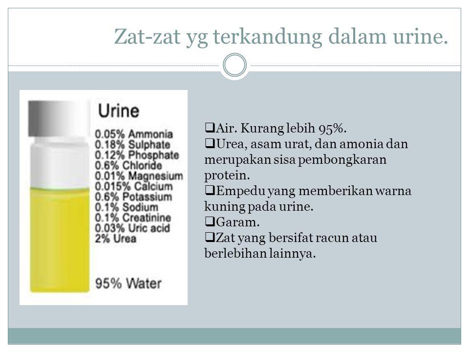 Zat-zat yg terkandung dalam urine.