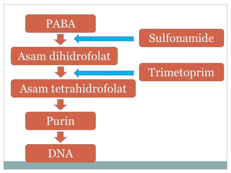 PABA Sulfonamide Asam dihidrofolat Trimetoprim Asam tetrahidrofolat Purin DNA