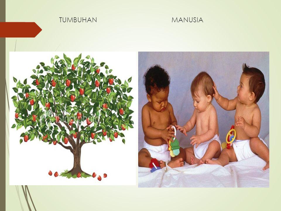 TUMBUHAN MANUSIA