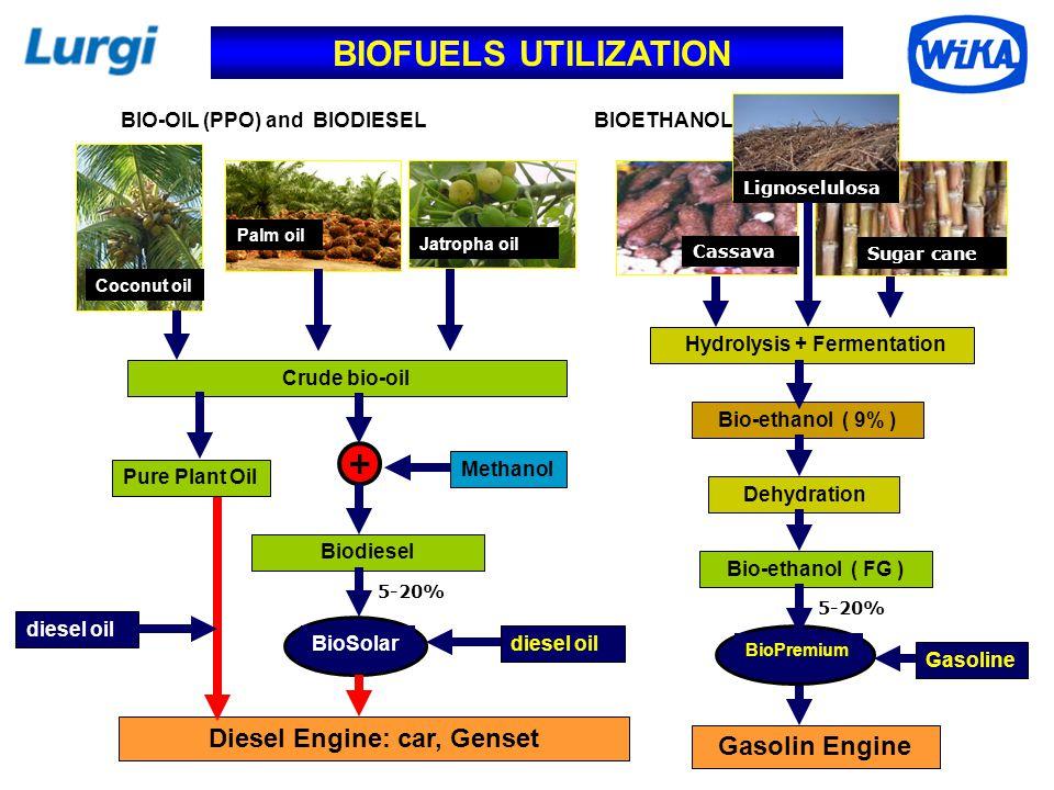 Diesel Engine: car, Genset Hydrolysis + Fermentation