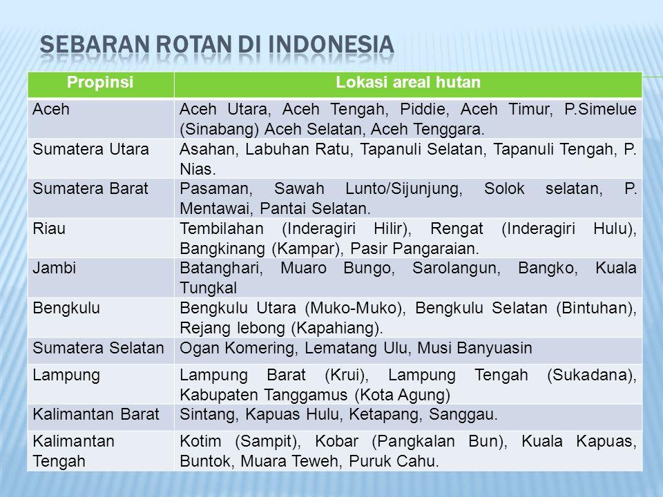 Sebaran rotan di Indonesia