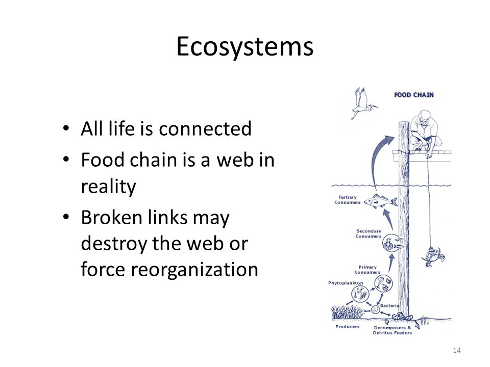 Ecosystems All life is connected Food chain is a web in reality