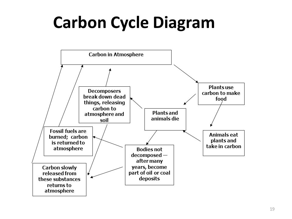 Carbon Cycle Diagram Carbon in Atmosphere