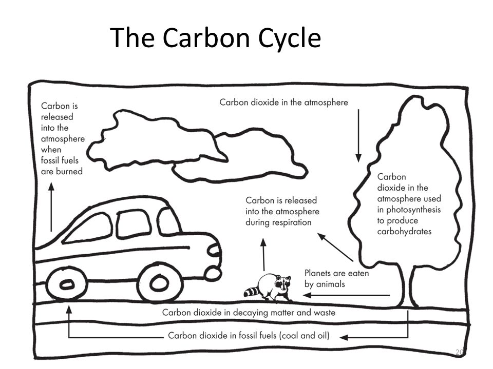 The Carbon Cycle