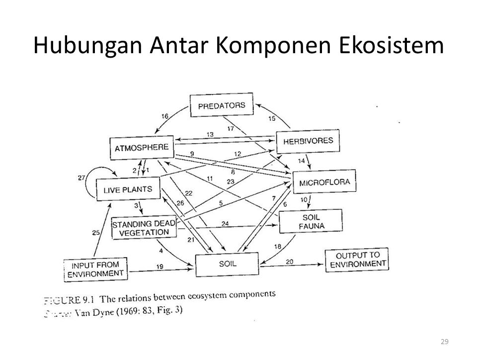 Hubungan Antar Komponen Ekosistem