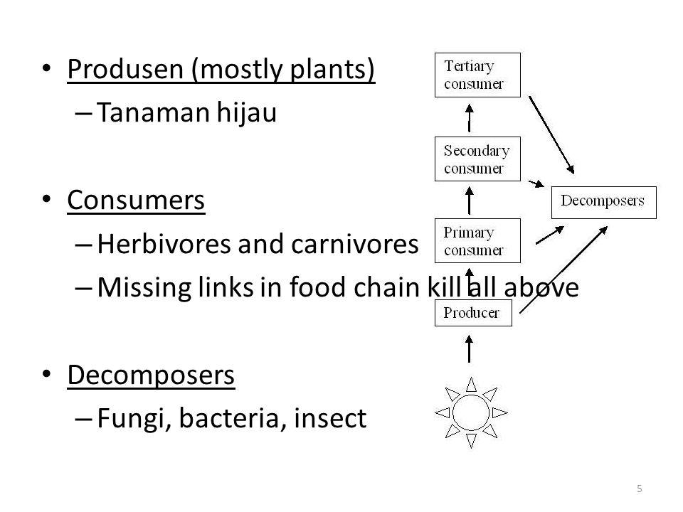 Produsen (mostly plants)