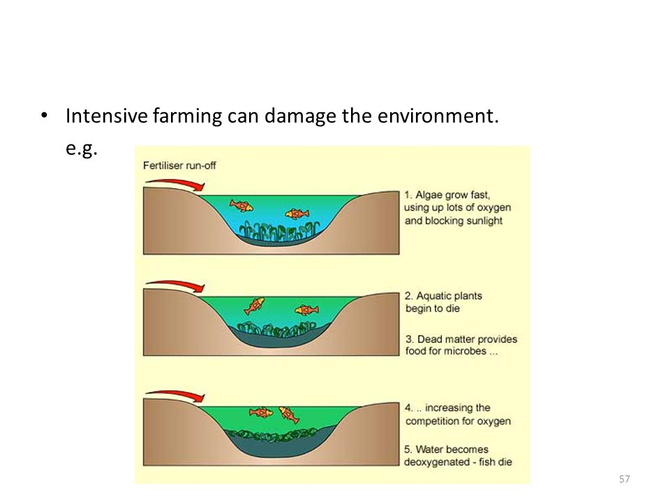 Intensive farming can damage the environment.