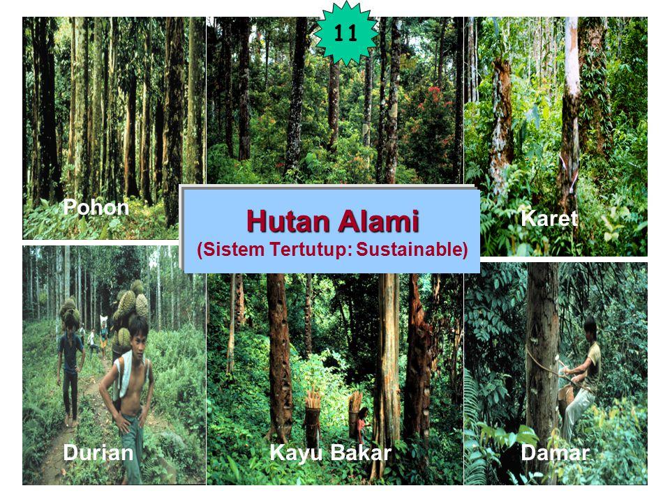 Hutan Alami (Sistem Tertutup: Sustainable)