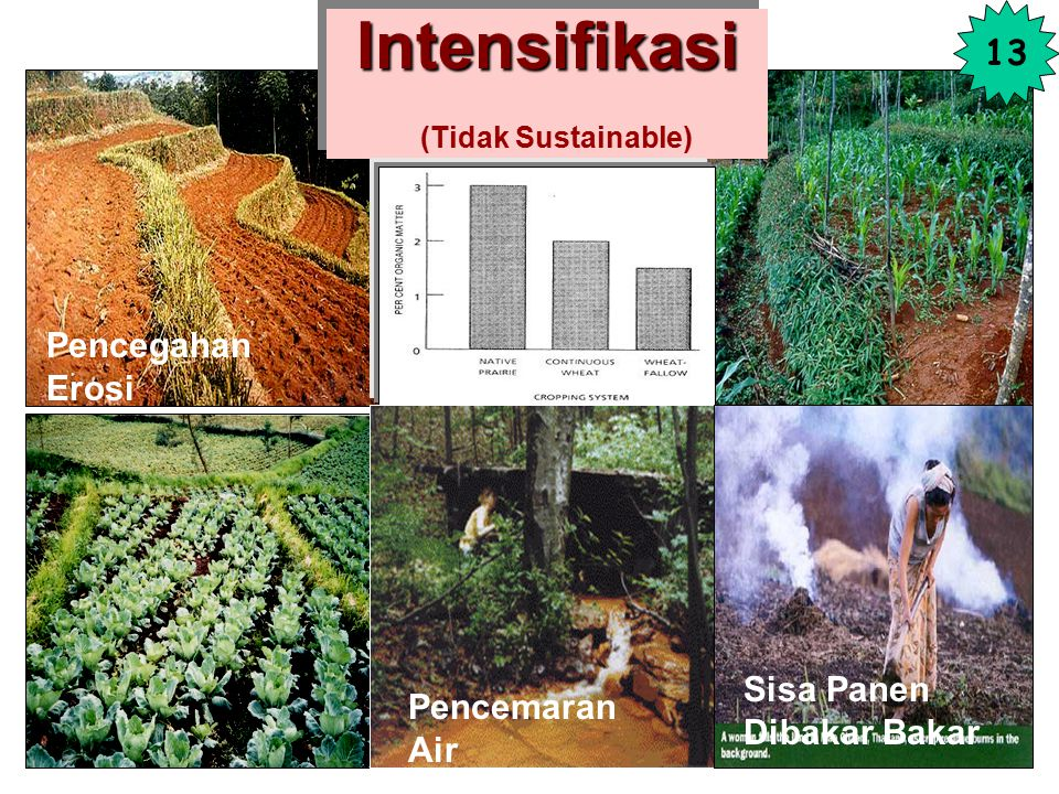 Intensifikasi (Tidak Sustainable)
