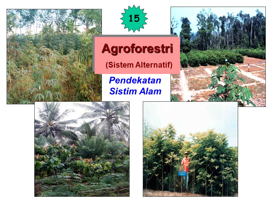 Agroforestri (Sistem Alternatif)
