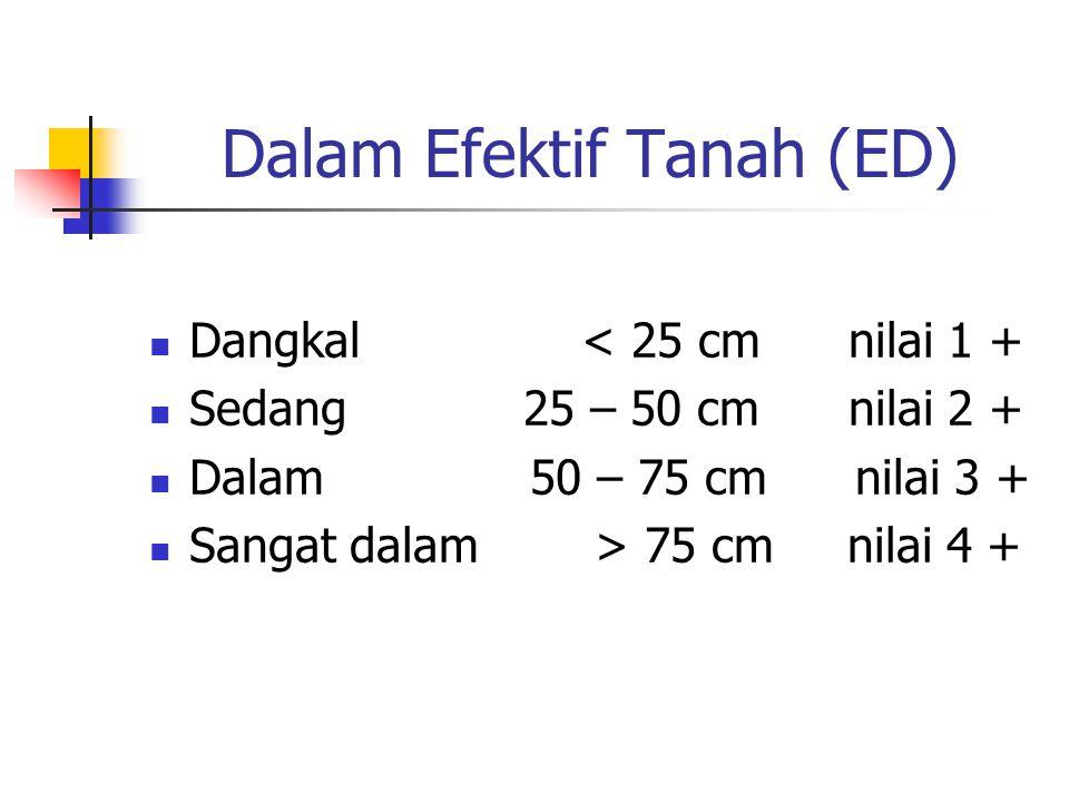 Dalam Efektif Tanah (ED)
