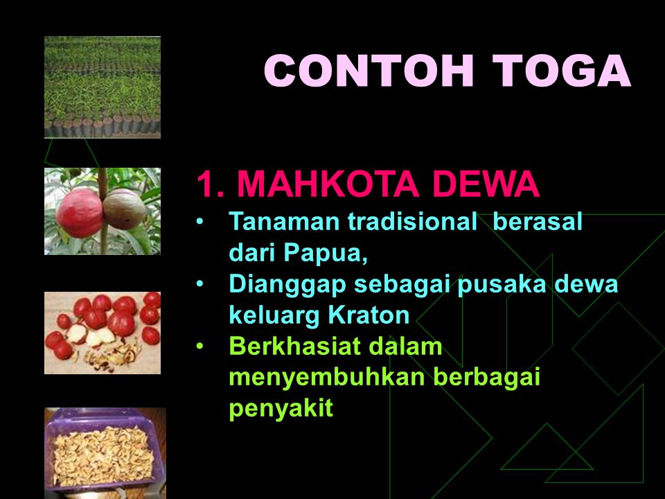 CONTOH TOGA 1. MAHKOTA DEWA Tanaman tradisional berasal dari Papua,