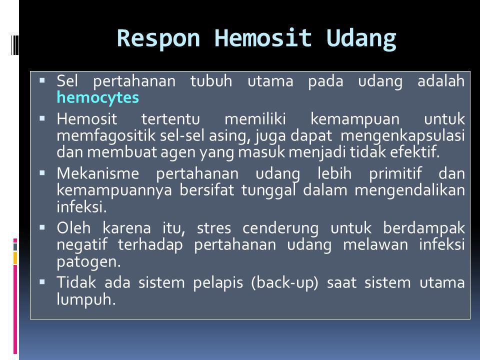 Respon Hemosit Udang Sel pertahanan tubuh utama pada udang adalah hemocytes.