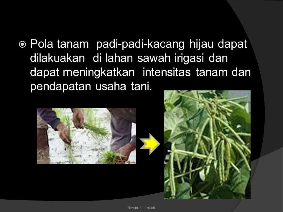 Pola tanam padi-padi-kacang hijau dapat dilakuakan di lahan sawah irigasi dan dapat meningkatkan intensitas tanam dan pendapatan usaha tani.