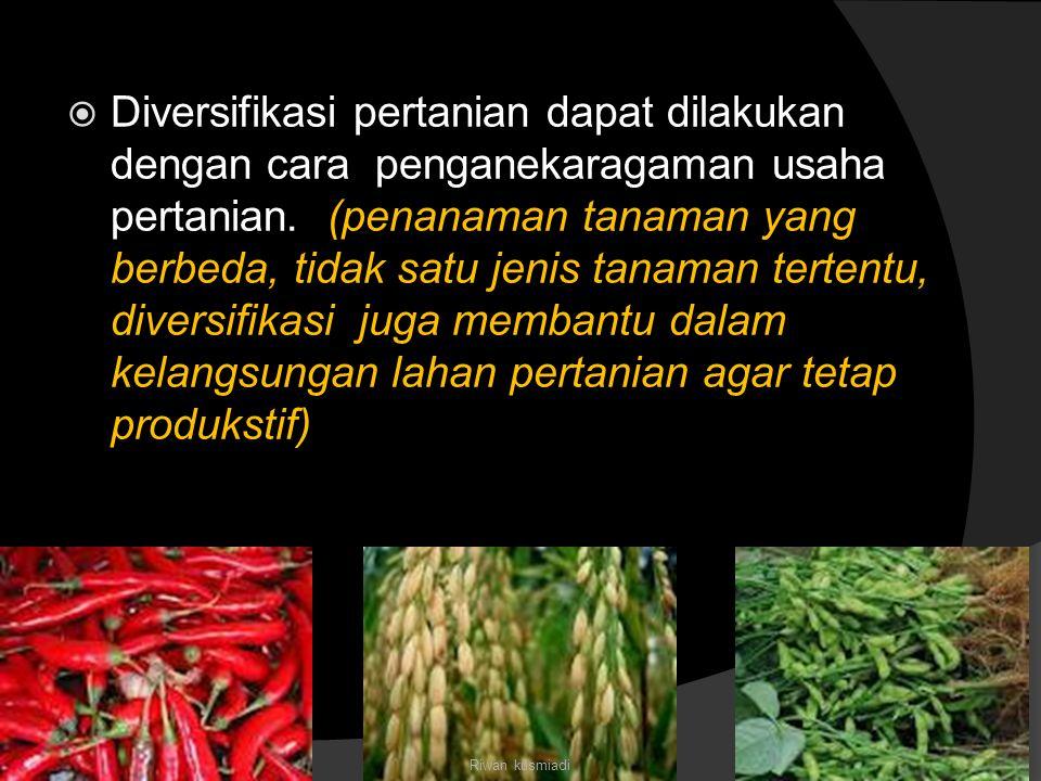 Diversifikasi pertanian dapat dilakukan dengan cara penganekaragaman usaha pertanian. (penanaman tanaman yang berbeda, tidak satu jenis tanaman tertentu, diversifikasi juga membantu dalam kelangsungan lahan pertanian agar tetap produkstif)