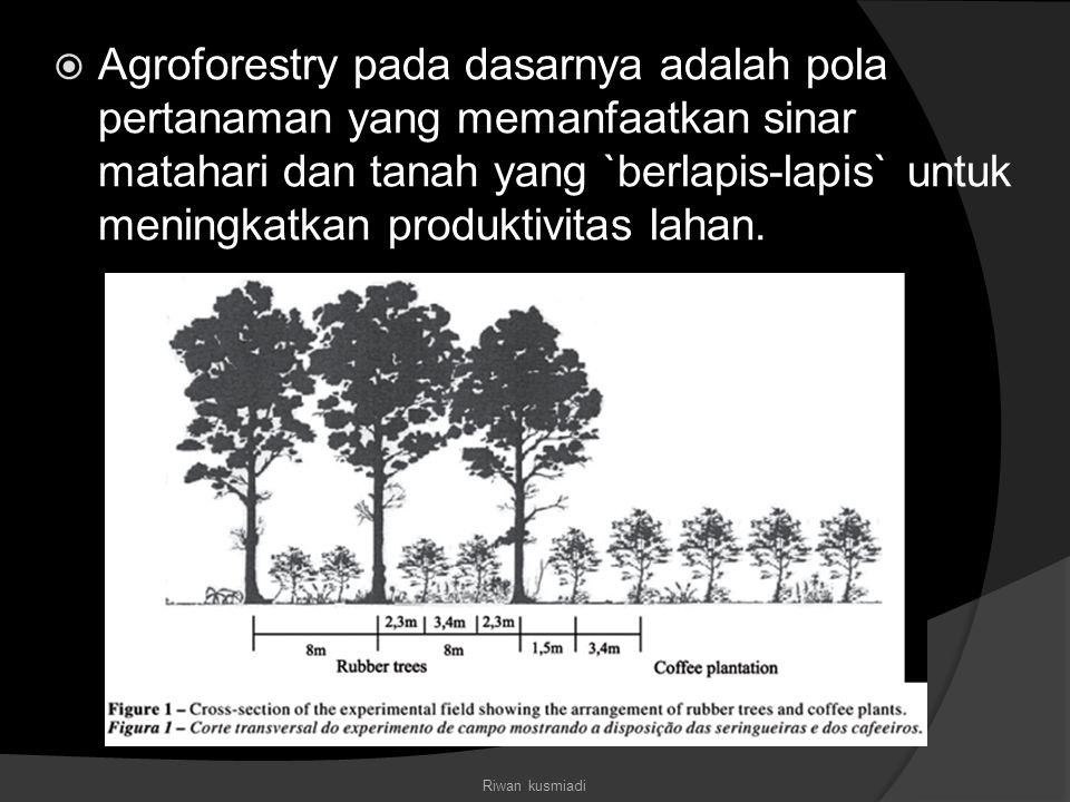Agroforestry pada dasarnya adalah pola pertanaman yang memanfaatkan sinar matahari dan tanah yang `berlapis-lapis` untuk meningkatkan produktivitas lahan.