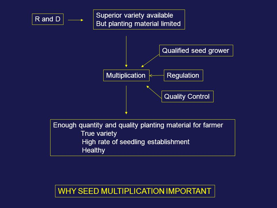 WHY SEED MULTIPLICATION IMPORTANT