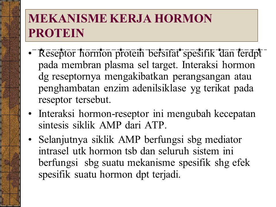MEKANISME KERJA HORMON PROTEIN