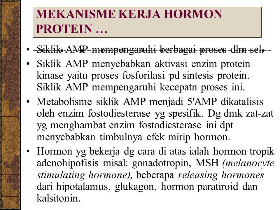MEKANISME KERJA HORMON PROTEIN …