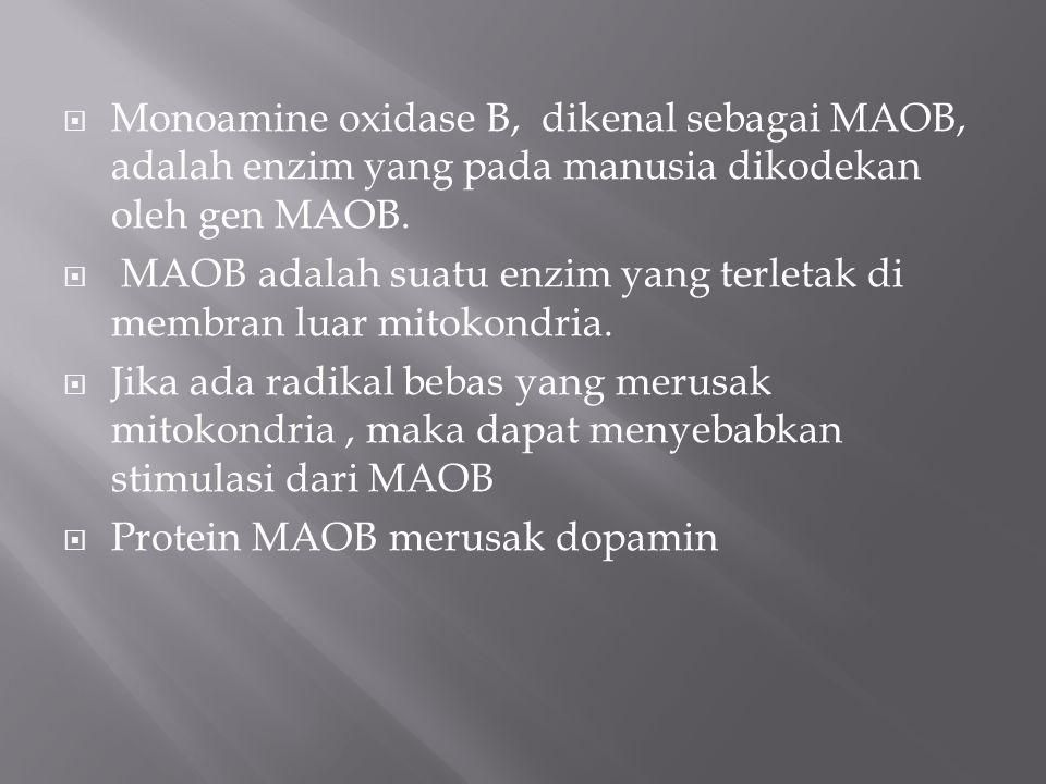 Monoamine oxidase B, dikenal sebagai MAOB, adalah enzim yang pada manusia dikodekan oleh gen MAOB.