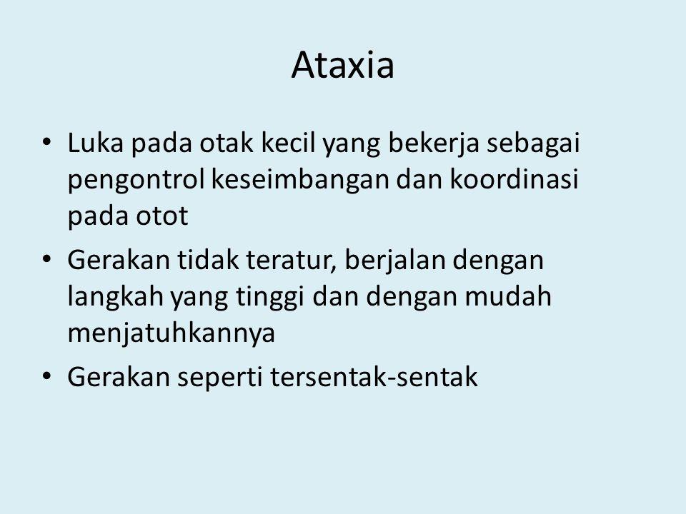 Ataxia Luka pada otak kecil yang bekerja sebagai pengontrol keseimbangan dan koordinasi pada otot.