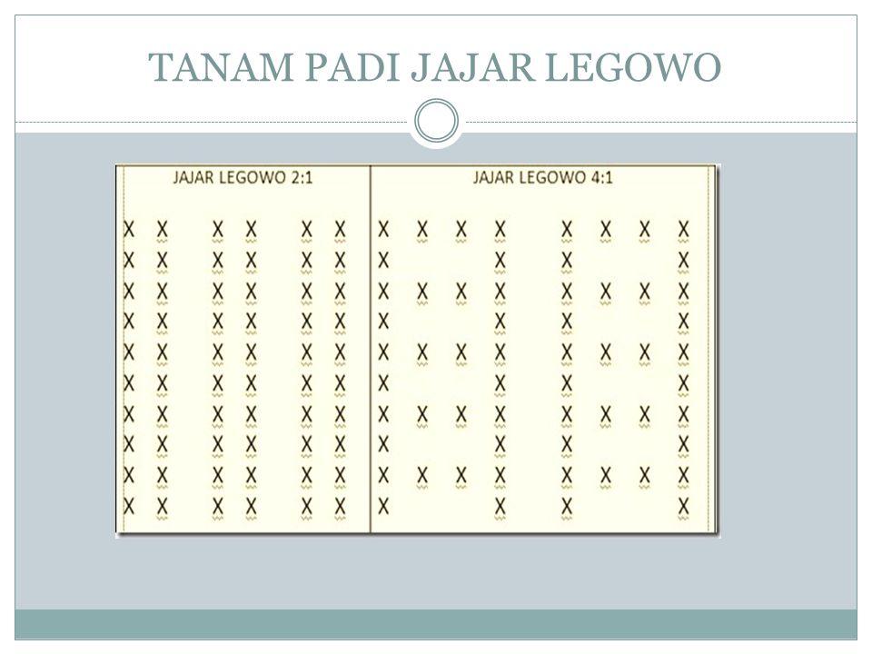TANAM PADI JAJAR LEGOWO
