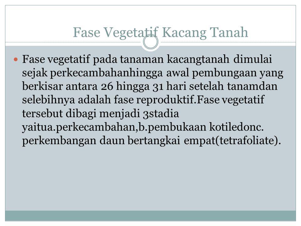 Fase Vegetatif Kacang Tanah