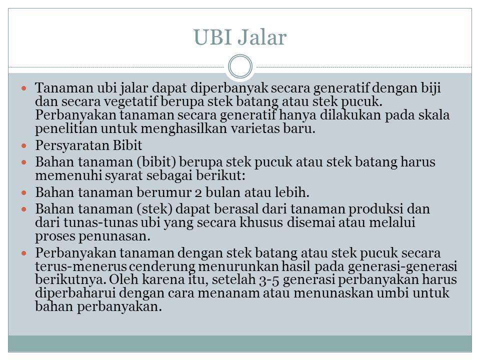 UBI Jalar