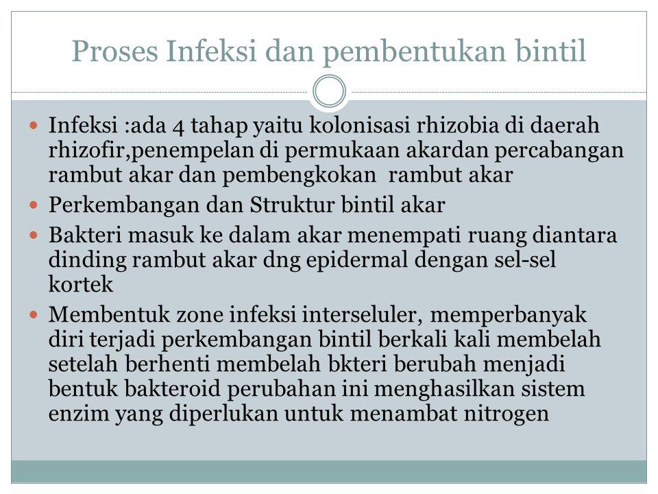 Proses Infeksi dan pembentukan bintil