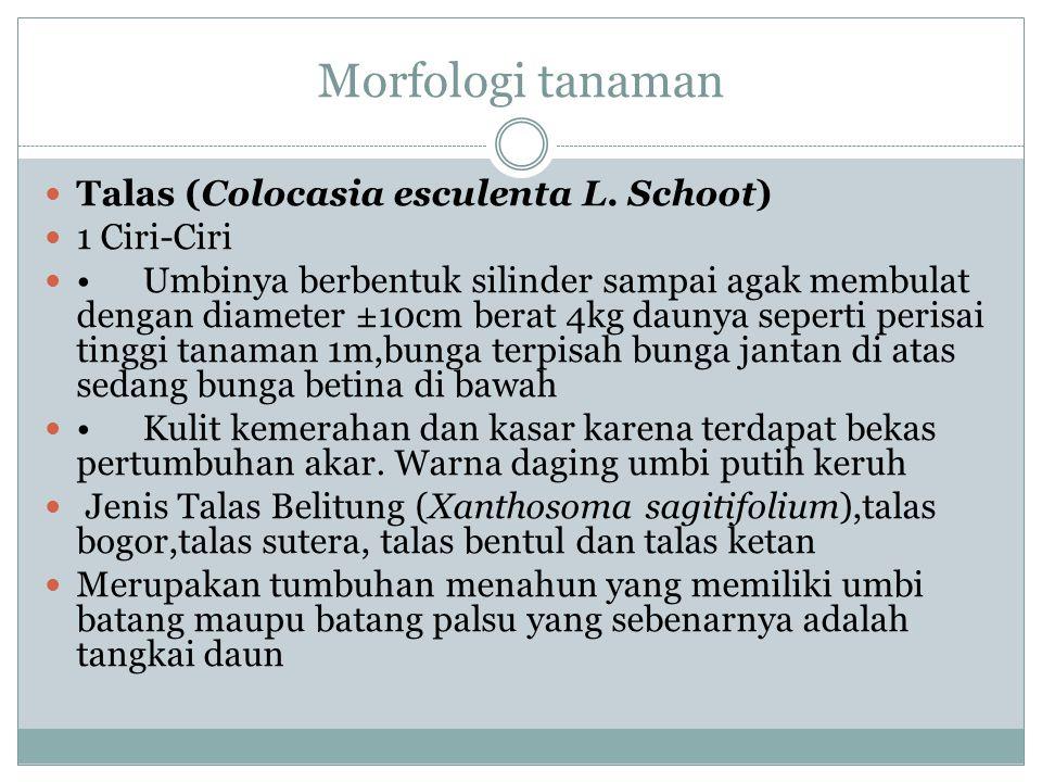 Morfologi tanaman Talas (Colocasia esculenta L. Schoot) 1 Ciri-Ciri