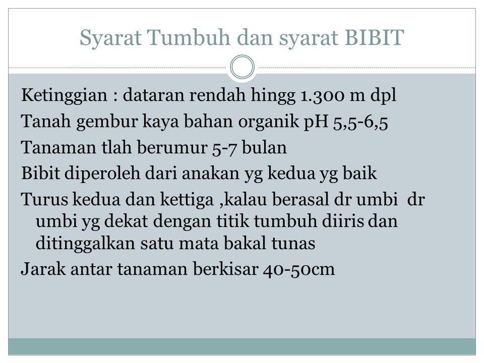 Syarat Tumbuh dan syarat BIBIT