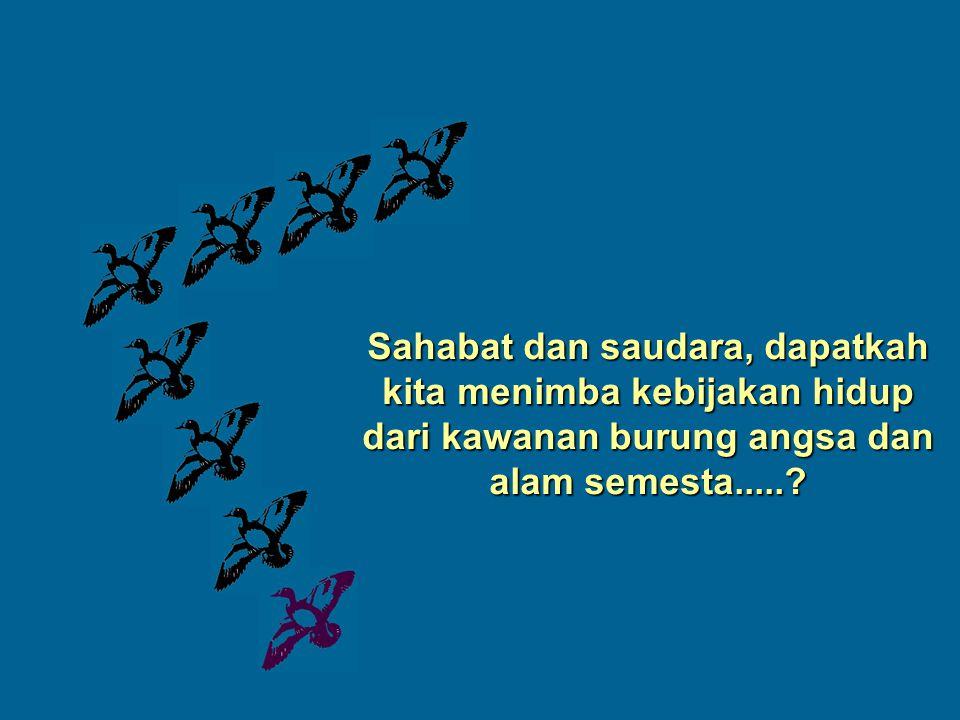 Sahabat dan saudara, dapatkah kita menimba kebijakan hidup dari kawanan burung angsa dan alam semesta.....