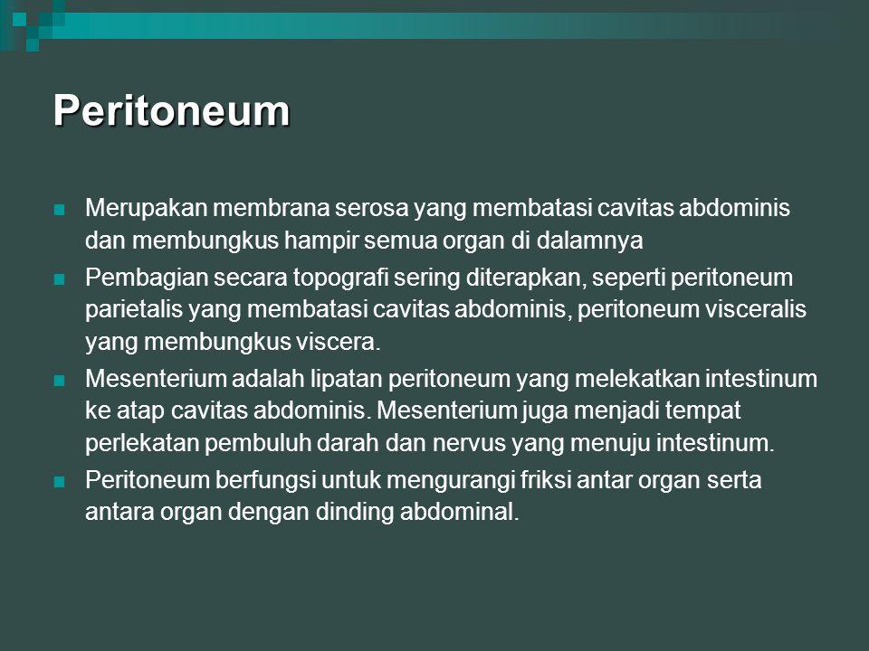 Peritoneum Merupakan membrana serosa yang membatasi cavitas abdominis dan membungkus hampir semua organ di dalamnya.