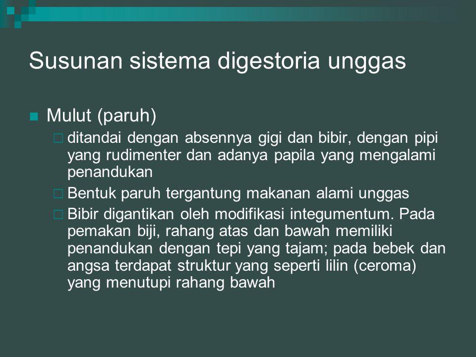 Susunan sistema digestoria unggas