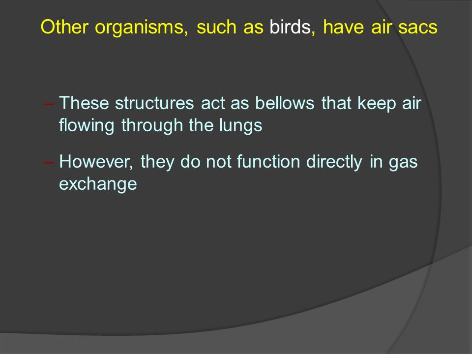 Other organisms, such as birds, have air sacs