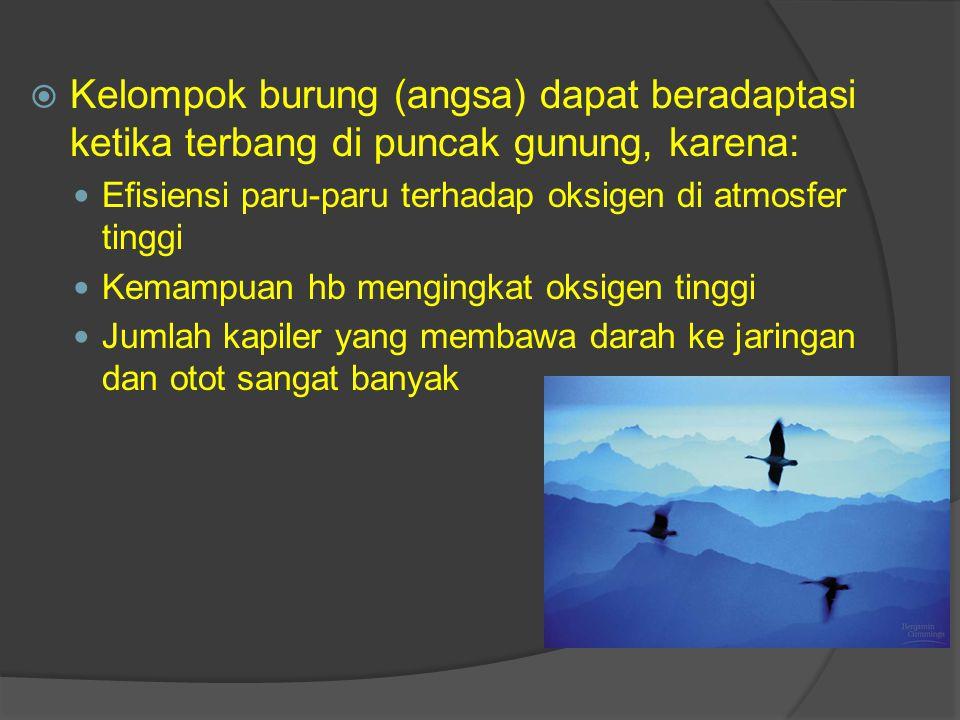 Kelompok burung (angsa) dapat beradaptasi ketika terbang di puncak gunung, karena: