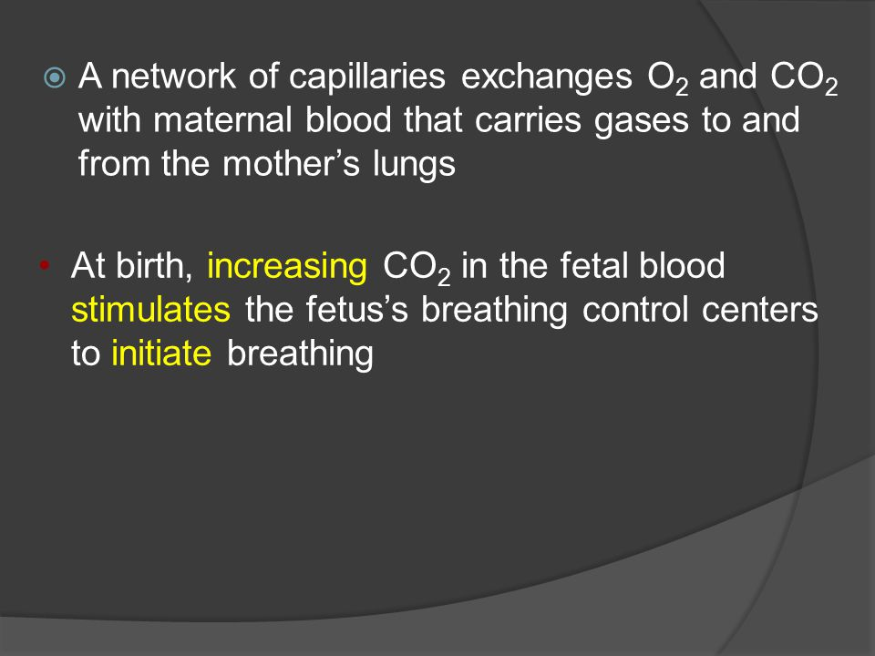A network of capillaries exchanges O2 and CO2 with maternal blood that carries gases to and from the mother's lungs