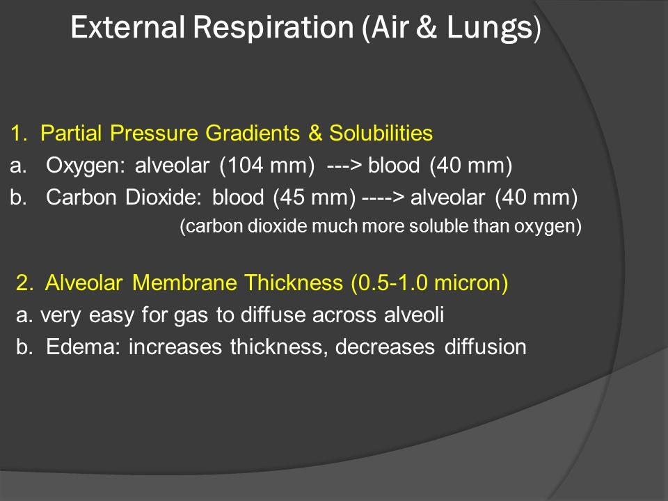 External Respiration (Air & Lungs)